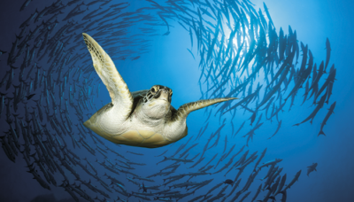 p12-13_turtle_gettyimages.png