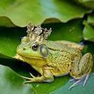 frogqueen